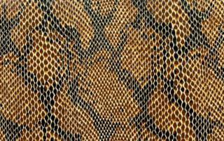 Snake-Brown